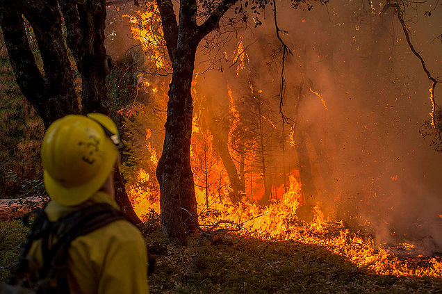 лесные пожары что делать