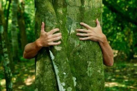 любовь к деревьям