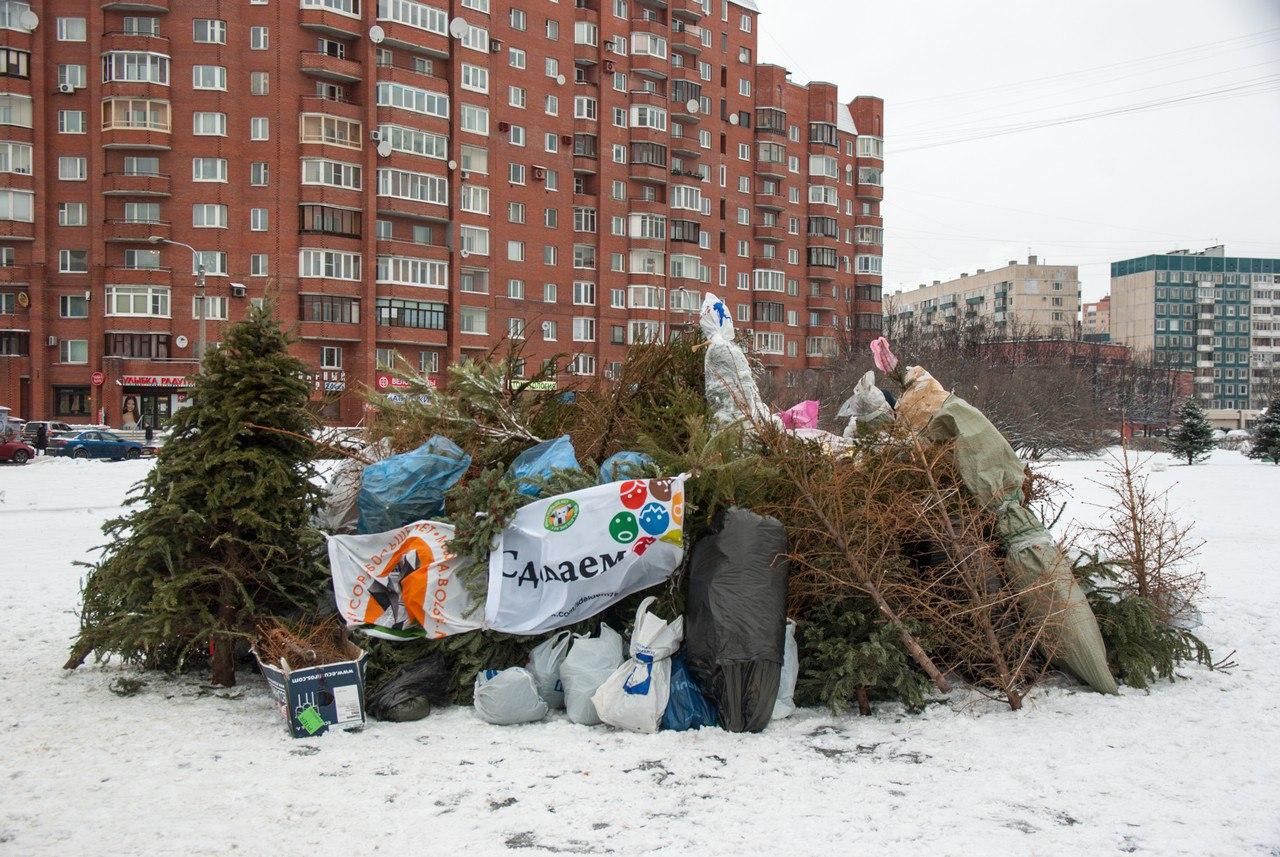 сдать елку в переработку